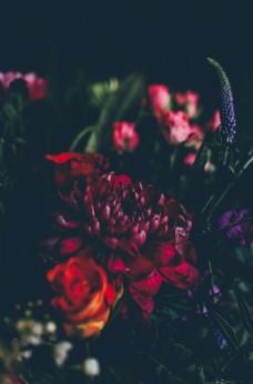 菊花玫瑰郁金香唯美鮮花