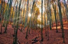 森林落葉陽光