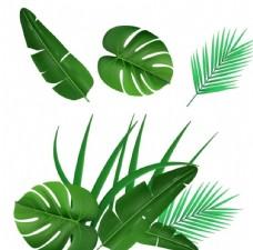 矢量植物葉子