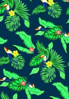 熱帶雨林巨嘴鳥