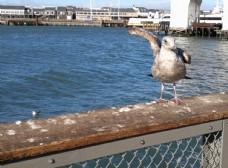 美国风光   旅游摄影  海鸥