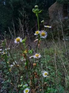 野花 花卉 自然 野蒿 花朵