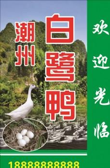 白鹭鸭广告