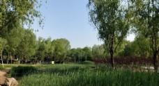 清新的公园