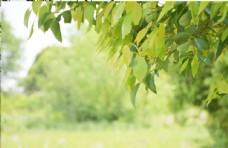 树木 树叶
