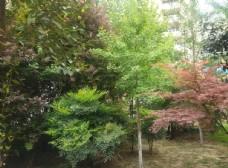 公园 绿树成荫 树木   树叶
