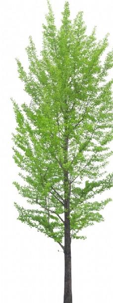 园林景观设计 PSD树木植物
