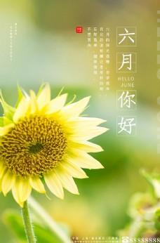 六月你好向日葵黄色调小清新风格