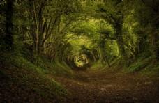 路径 森林 树木 树叶 落叶