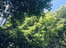树木 树叶 绿树