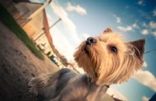 可爱的动物 小狗