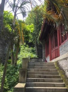 林荫小道台阶