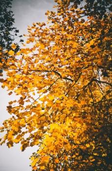 秋叶落叶唯美