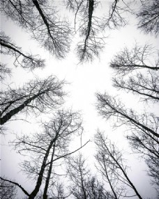 森林 仰视树木