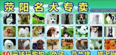 宠物狗狗海报