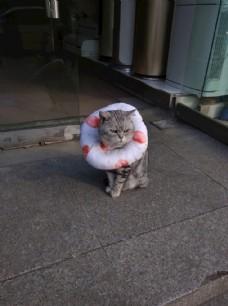 戴脖套的猫