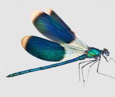 蜻蜓 PNG素材 设计 其他