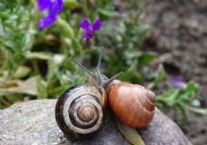 花园里的蜗牛