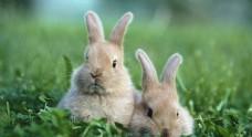 可爱兔兔摄影拍照