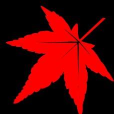 红枫叶PSD
