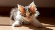 可爱乱毛猫咪摄影