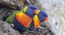 动物世界绚烂鸟儿