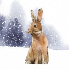 雪地里的兔子