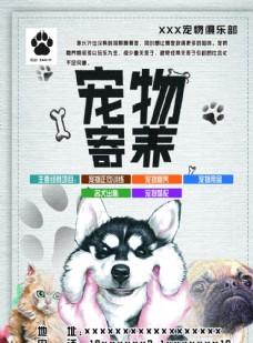 宠物正向训练海报