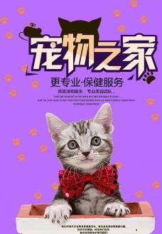 宠物店促销 宠物海报 宠物交易