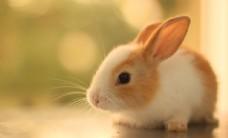 可爱兔子照片