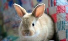 呆萌兔子宠物照片