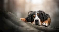 宠物狗狗照片