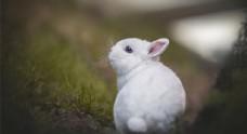 可爱兔子思考人生