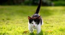 捕猎小奶猫