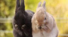 扑朔小兔子