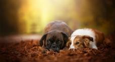 狗狗治愈照片宠物壁纸