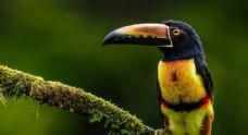 动物世界奇异鸟类