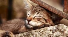 睡着的流浪猫