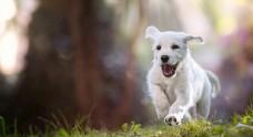 狗狗户外照片宠物壁纸