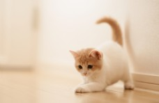可爱小奶猫照片
