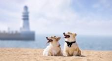 宠物动物合集治愈狗狗