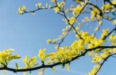 花卉 装饰 春天 早安心语 问