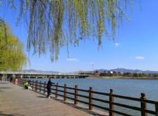 春天户外河边栏杆道路风景