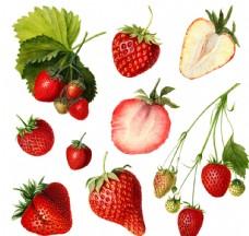 草莓素材 PNG 免抠