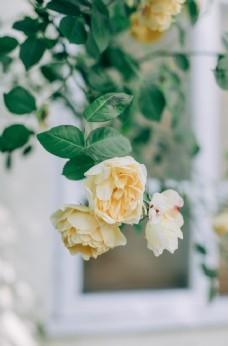 花朵花苞花蕾自然花園背景素材