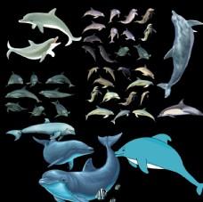 海豚png免扣