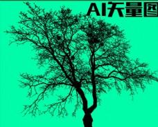 树木 森林