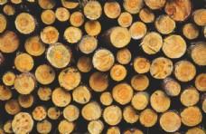 木材树木截面树皮