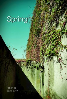 春天 墙 藤