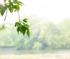 春天绿色植物叶子河岸高清摄影图